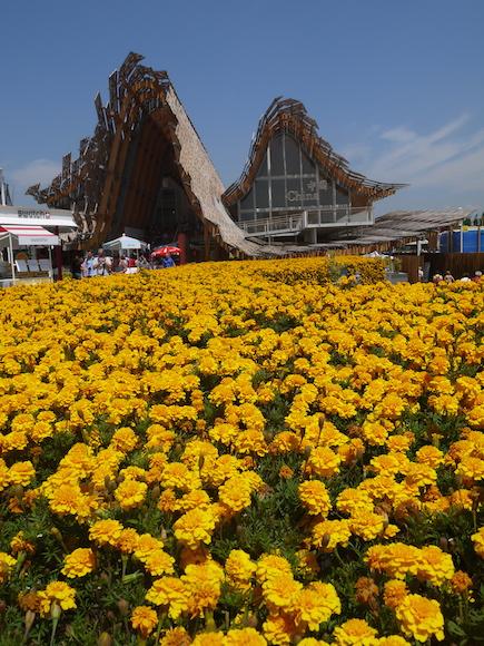Le pavillon de la Chine et son jardin oriental